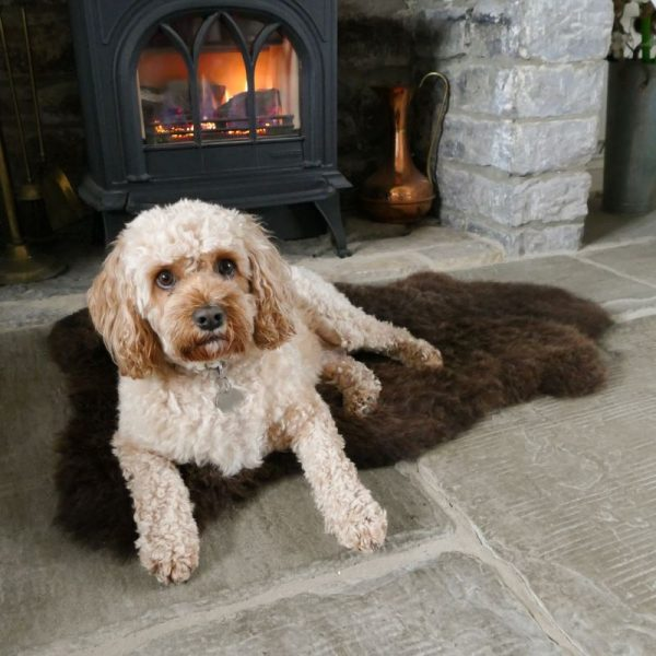 Short Fur Undyed Sheepskin Throw/Rug with cute dog lying on it