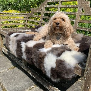 British Patchwork Sheepskin Throw with Dog lying on top